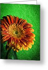 Textured Orange Flower Greeting Card