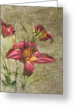 Textured Red Daylilies Greeting Card