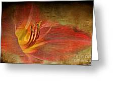 Textured Red Daylily Greeting Card