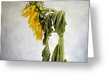 Textured Sunflower Greeting Card by Bernard Jaubert