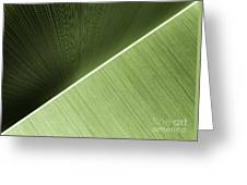 Patterns And Colors. Green. Greeting Card
