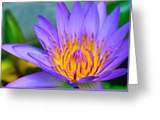 Thai Colours Greeting Card