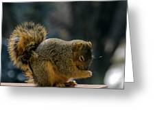Thank You For The Nuts Greeting Card