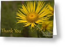 Thank You Yellow Aster Greeting Card