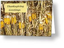 Thanksgiving Greeting Card - Dried Corn Stalks Greeting Card