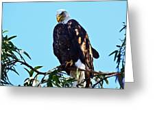 That Eagle Stare Greeting Card
