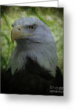 The American Bald Eagle - Lee Dos Santos Greeting Card