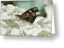 The American Snout - Libytheana Carinenta Greeting Card