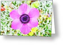 The Anemone Is So Pink Greeting Card