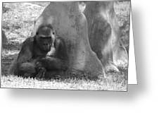 The Angry Ape In Black And White Greeting Card