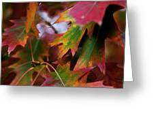 The Autumn Leaves Greeting Card