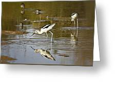 The Avocets  Greeting Card