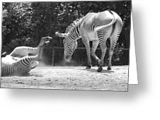The Back End In Black And White Greeting Card