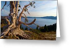 The Banks Of Crater Lake Greeting Card