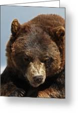 The Bear 2 Greeting Card