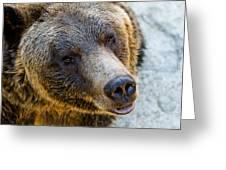 The Bear Head Shoot Greeting Card