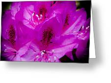 The Beautiful Rhododendron Greeting Card