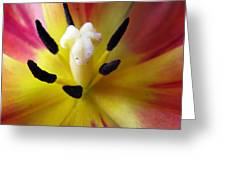 The Beauty From Inside Square Format Greeting Card