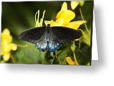 The Beauty Of A Butterfly  Greeting Card