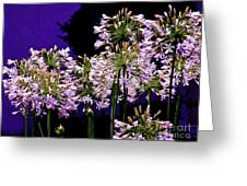 The Beauty Of Flowering Garlic Greeting Card