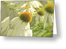The Beauty Of The Coneflower Greeting Card