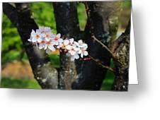 The Beauty Stem Greeting Card