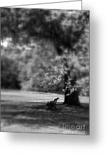 The Bench In The Park Greeting Card