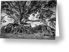 The Biggest Rain Tree In Thailand Greeting Card