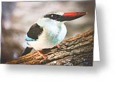The Bird Knows Greeting Card
