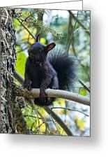 The Black Abert's Squirrel Greeting Card