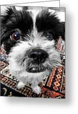 The Black And White Dog Greeting Card