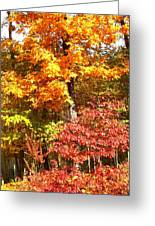 The Blaze Of Autumn Greeting Card