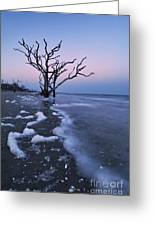 The Boneyard At Botany Bay - D006884 Greeting Card