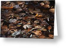 The Browns Of Fall Greeting Card