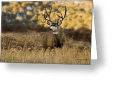 The Buck Stops Here Greeting Card by Darryl Gallegos
