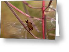 The Bug With Fireweed Seeds Greeting Card
