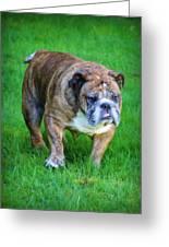 The Bulldog Shuffle Greeting Card