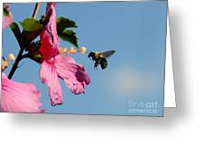 The Bumblebee And The Rose If Sharon Greeting Card