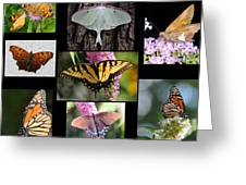 The Butterfly Collection Greeting Card