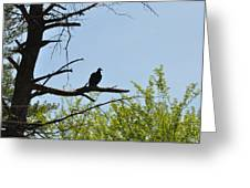 The Buzzard Is Two Faced Greeting Card