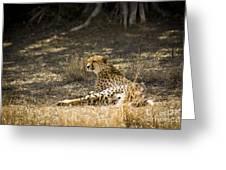 The Cheetah Wakes Up Greeting Card