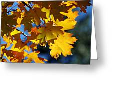 The Colors Of Autumn In Arizona  Greeting Card