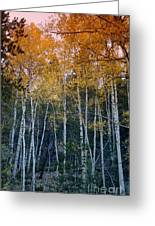 The Colors Of Fall II Greeting Card