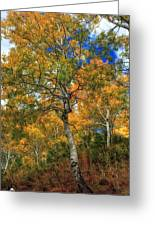 The Colors Of The Aspen Forest Greeting Card