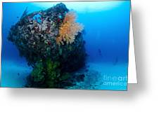 The Coral Encrusted Stern Greeting Card