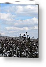The Cotton Crops Of Limestone County Alabama Greeting Card