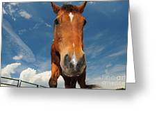 The Curious Horse Greeting Card