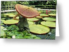 The Cut Pad Of A Victoria Amazonica Greeting Card