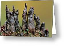 The Cypress Knees Chorus Greeting Card