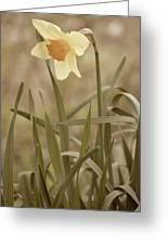 The Daffodil In Partial Sepia Greeting Card
